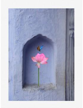 Rajasthan Diaries 03