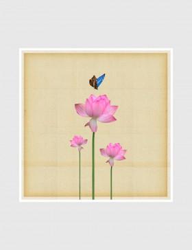 Lotus Walk 07